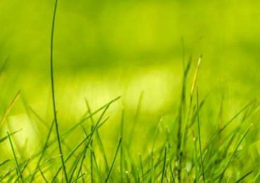 Green-nature-grass-1200x300